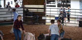Swine show meigs county fair 2020